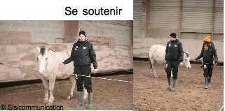management-cohesion-equipe-cheval