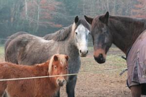 cheval-mediateur-3