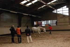 cohesion-equipe-equi-coaching