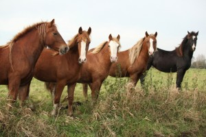 Batch of young ponnies on autumn pasturage