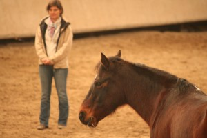 equi-coaching-horse-coaching-cecile-lavault